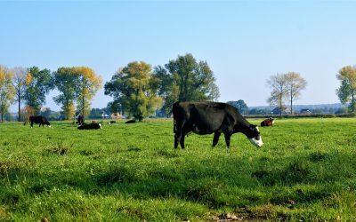 Uitspraak Raad van State Wet natuurbescherming: PAS onderuit